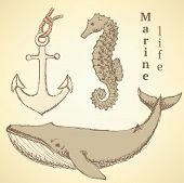 picture of seahorse  - Sketch seahorse whale and anchor in vintage style vector - JPG