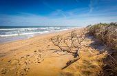 Beach shoreline with tree