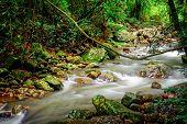 Nerang Creek