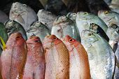 stock photo of fish  - Background of fresh red fish on the Asian fish market - JPG