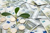 Plant Growing From Euro Currency