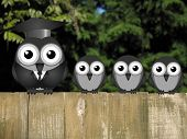 picture of bird fence  - Comical teacher and student birds perched on a timber garden fence against a foliage background - JPG