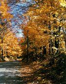 New England Foliage