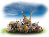 pic of eland  - group of africa animals with green grass and blue sky - JPG