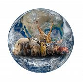 foto of eland  - group of africa animal with planet earth Element of this image are furnished by NASA - JPG