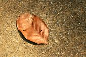 stock photo of dead plant  - brown dead leaf on soil or ground - JPG