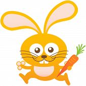 picture of bulge  - Cute friendly bunny with long ears - JPG