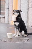 image of begging dog  - mongrel dog begs with with a can in a mouth - JPG
