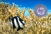 picture of jellyfish  - light blue jellyfish swim near coral reef - JPG