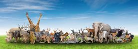 picture of eland  - animal of the world with fresh green grass and blue sky - JPG