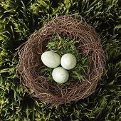 Speckled eggs in nest on grass.