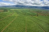 Aerial of irrigated cropland in Maui, Hawaii.