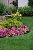 picture of petunia  - Landscaped garden with flowers - JPG
