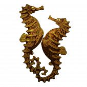Seahorses Enjoying Life.