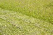 image of splayed  - splay meadow - JPG