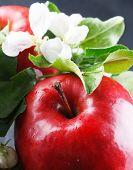 Постер, плакат: Красные яблоки и белые цветки