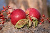 Twin Apples Arrangement