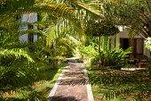 Natural Landscaping With The Stone Path In A Tropical Hotel. Landscaped Garden In A Tropic. Scenic P poster