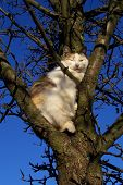 A Cat In The Tree In Autumn