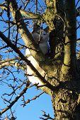 Eine Katze im Baum 2 Standortwahl
