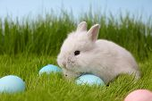 Easter Bunny Rabbit With Painted Eggs On Grass Lawn. Easter Holiday Concept. poster