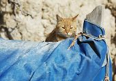 Big Relaxing Cat On Siesta Time, Cat Resting, Cat On A Boat On Sunny Day, Lazy Cat In The Street On  poster