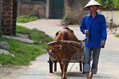 Vietnamese Man with Water Buffalo
