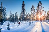 Panoramic View Of Man Cross-country Skiing On A Track In Beautiful Winter Wonderland Scenery In Scan poster
