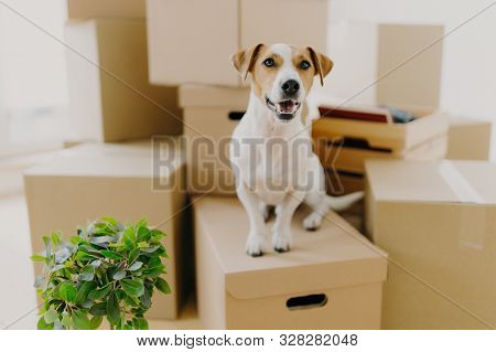 poster of Funny Dog Sits On Carton Boxes, Green Indoor Plant Near, Relocates In New Modern Apartment, Has Brow