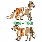 Childish Tiger And Horse Animal Splice Vector Illustration. Hand Drawn Doodle Inked Wildlife Animal  poster