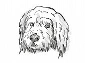 Retro Cartoon Style Drawing Of Head Of A Goldendoodle, A Domestic Dog Or Canine Breed On Isolated Wh poster