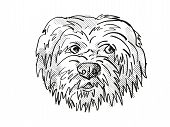 Retro Cartoon Style Drawing Of Head Of A Havanese Dog, A Domestic Canine Breed On Isolated White Bac poster