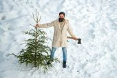 A Handsome Lumber With A Beard Carries A Christmas Tree. Christmas Lumberjack With Axe And Christmas poster