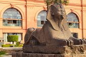 Sphinx Statue Near Entrance In Museum Of Egyptian Antiquities, Known Commonly As The Egyptian Museum poster