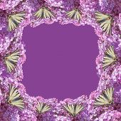 Swallowtail On The Lilac Flowers Frame