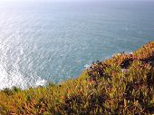 Flora of the Cabo da Roca