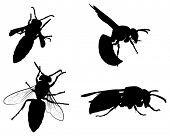 illustration with wasp silhouettes collection isolated on white background