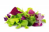 Salad Mix Arugula, Frisee, Radicchio And Spinach On White Background poster