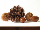 picture of pine cone  - pine cone and nuts - JPG