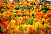 autumn mountain view