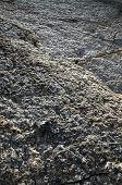 Dinosaur Footprint Track