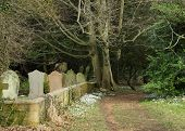 Snowdrops By A Woodland Cemetery