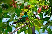 Beautiful Sunbird in grapefruit tree