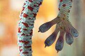 image of tokay gecko  - A large Tokay Gecko - JPG