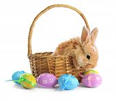 stock photo of hare  - Fluffy foxy rabbit in basket with Easter eggs isolated on white - JPG