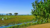 vista de um campo de paddy no Delta del Ebre, na Catalunha, Espanha