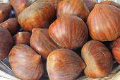 Sweet Chestnuts (Castanea sativa)