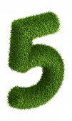 Natural grass number 5