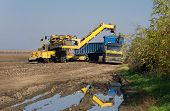 stock photo of truck farm  - Agricultural mechanization dumping sugar beet in trailer - JPG