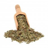 Neem herb used in ayurvedic alternative medicine in a wooden scoop over white background.